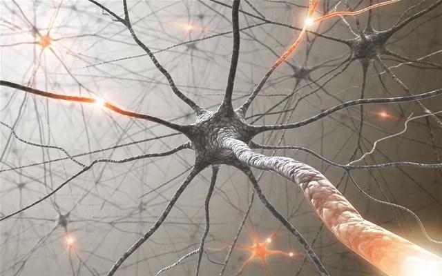 akademia_neuroedukacji
